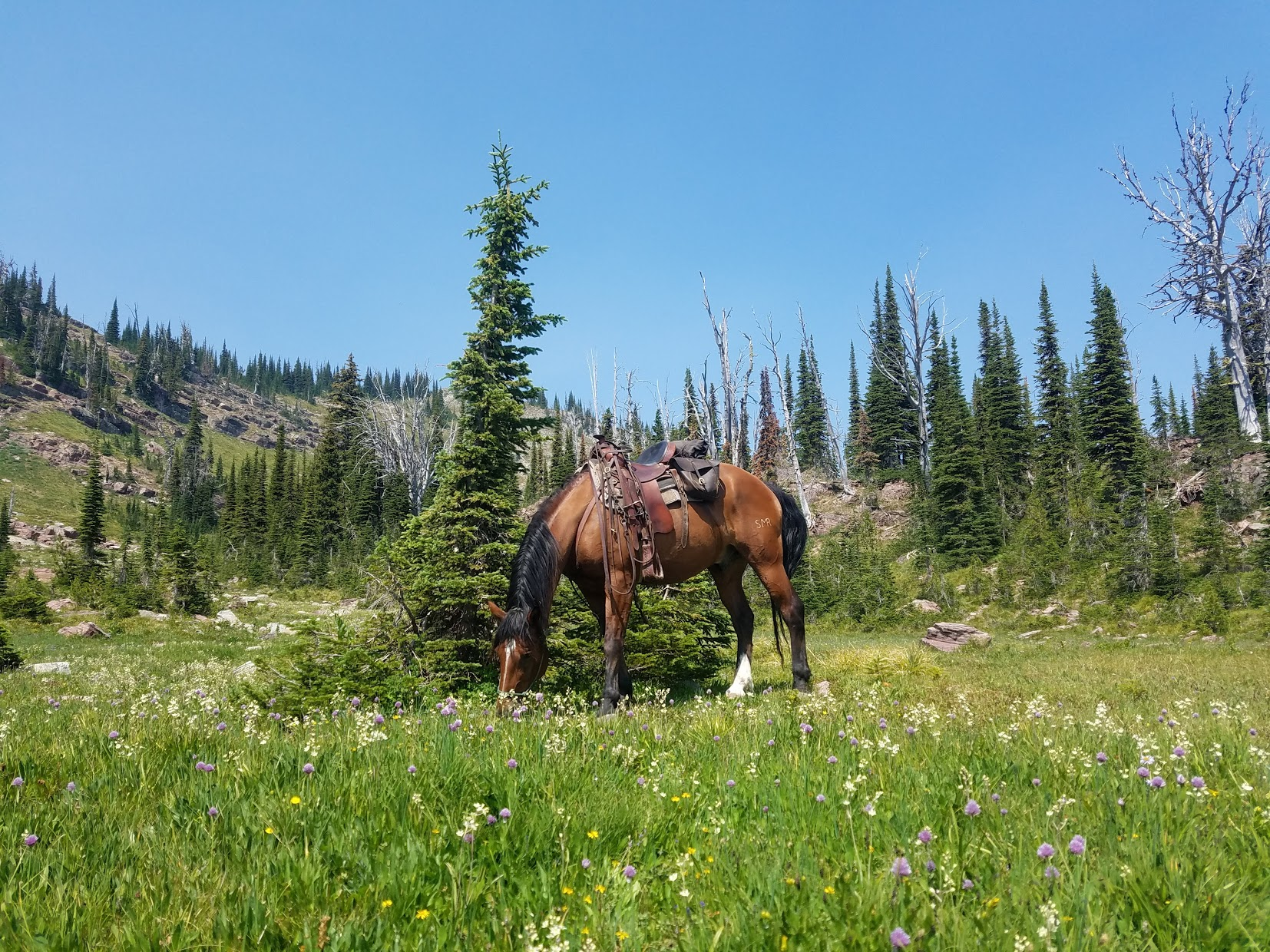 Luke grazing at Upper Twin