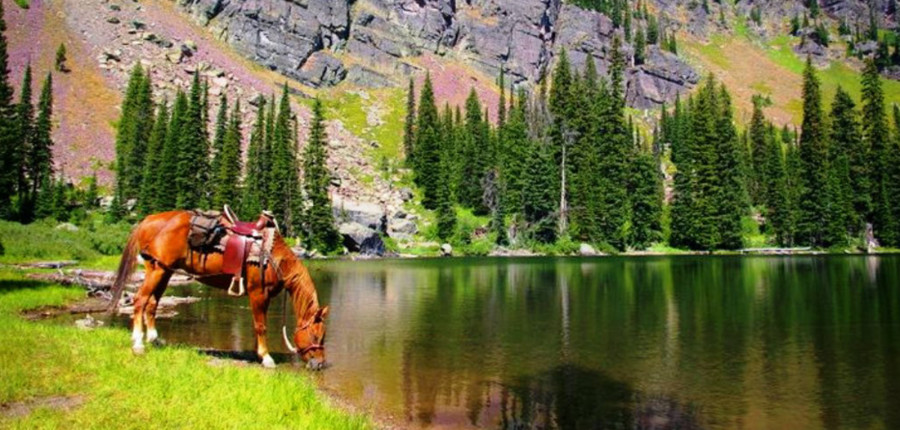 Custom Montana Fishing Trips & Vacations