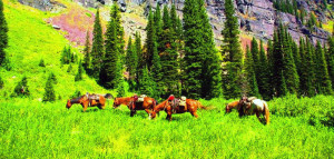 Horses grazing at palisades - Swan Mountain Outfitters