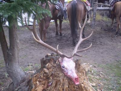 Montana Elk Hunting   Guided Elk Hunts