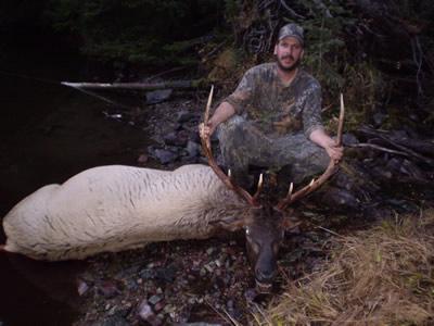 Montana Elk Hunting | Guided Elk Hunts